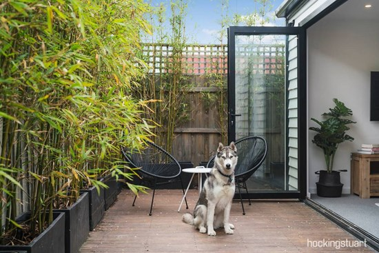 What to look for in a home when you've got pets to consider