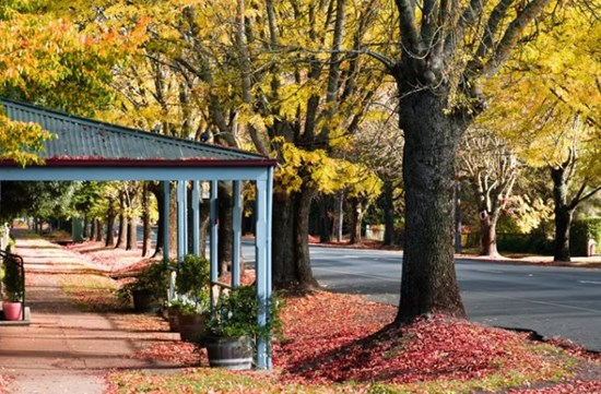 The Best Things To Do in Daylesford