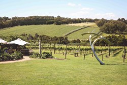 Mornington Peninsula Top 5 Wineries
