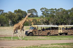 Werribee Top 5 Attractions